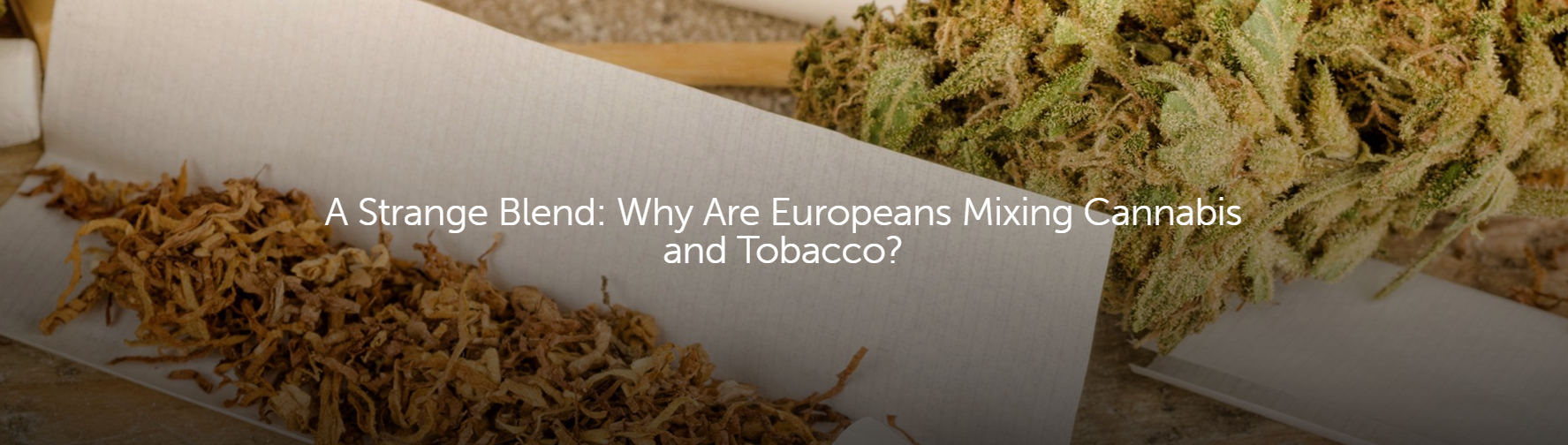 why are europeans mixing cannabis and tobacco