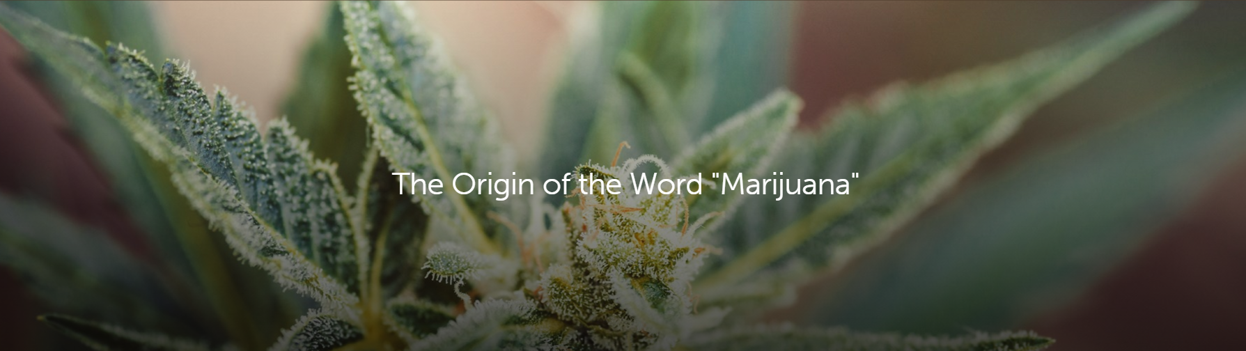 origin of the word marijuana