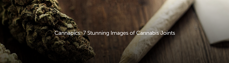 stunning images of cannabis joints