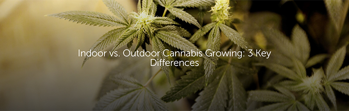 Indoor vs. Outdoor Cannabis Growing: 3 Key Differences