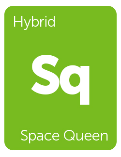 Leafly Space Queen cannabis strain tile