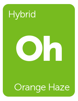 Leafly Orange Haze cannabis strain tile