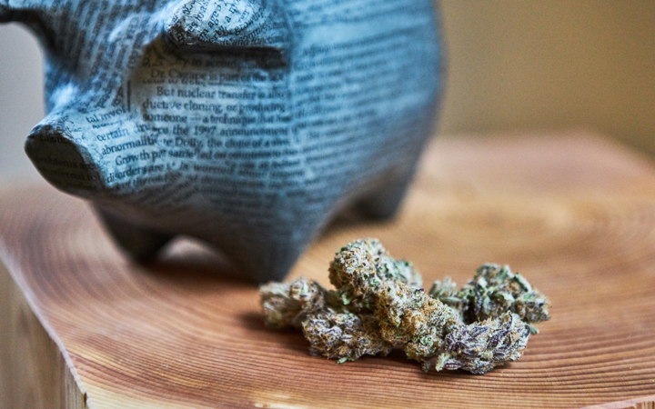 Piggy bank with cannabis buds