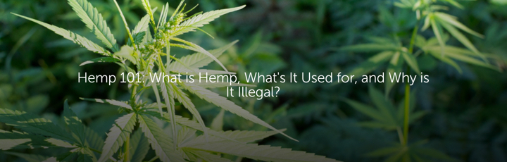 Hemp 101: What is Hemp, What's It Used for, and Why is It Illegal?