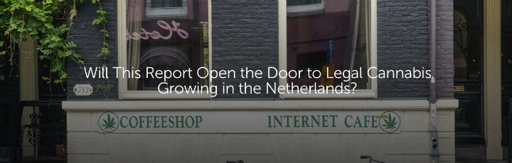 Will This Report Open the Door to Legal Cannabis Growing in the Netherlands?