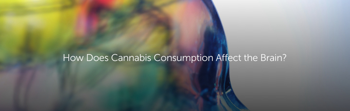 How Does Cannabis Consumption Affect the Brain?