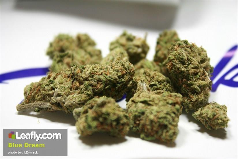 Leafly Blue Dream cannabis strain photo