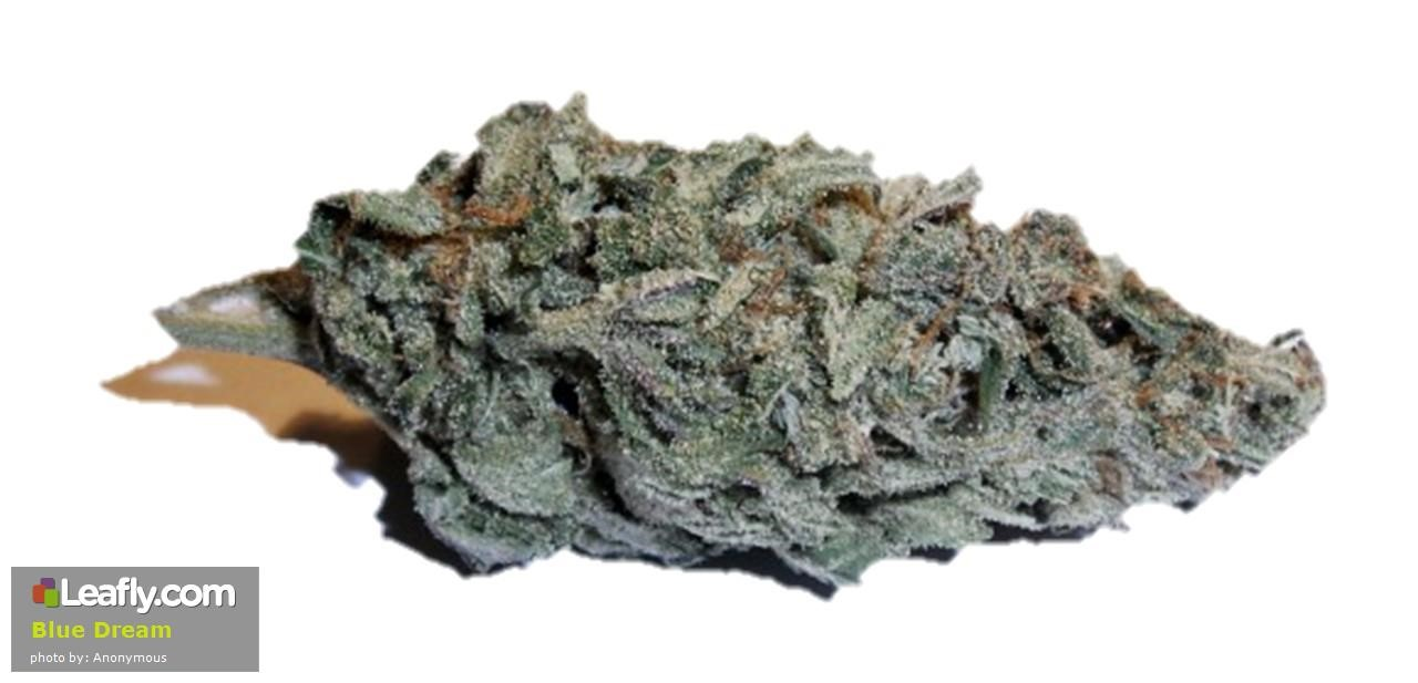 Leafly Blue Dream cannabis strain