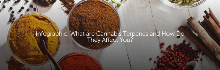 Infographic: What are Cannabis Terpenes and How Do They Affect You?