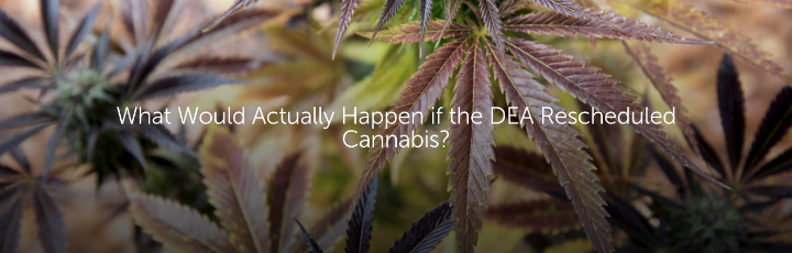 What Would Actually Happen if the DEA Rescheduled Cannabis?